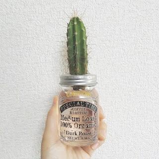 サボテンの水耕栽培は瓶の中で根が伸びる